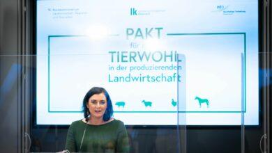 """""""Wir reden nicht nur von Tierwohl, wir setzen konkrete Maßnahmen und Anreize, um tierwohlgerechte Haltung attraktiver zu machen"""", so Ministerin Elisabeth Köstinger (© BMLRT/Paul Gruber)"""