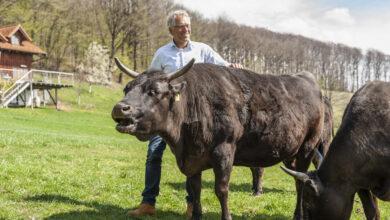 Gerhard Zadrobilek, einst jüngster Sieger der Österreich-Rad- rundfahrt, ist heute mit seiner Wagyu-Zucht erfolgreich.